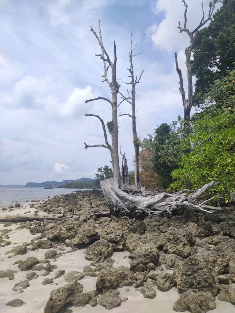 4 day Andaman itinerary around Elephanta Beach