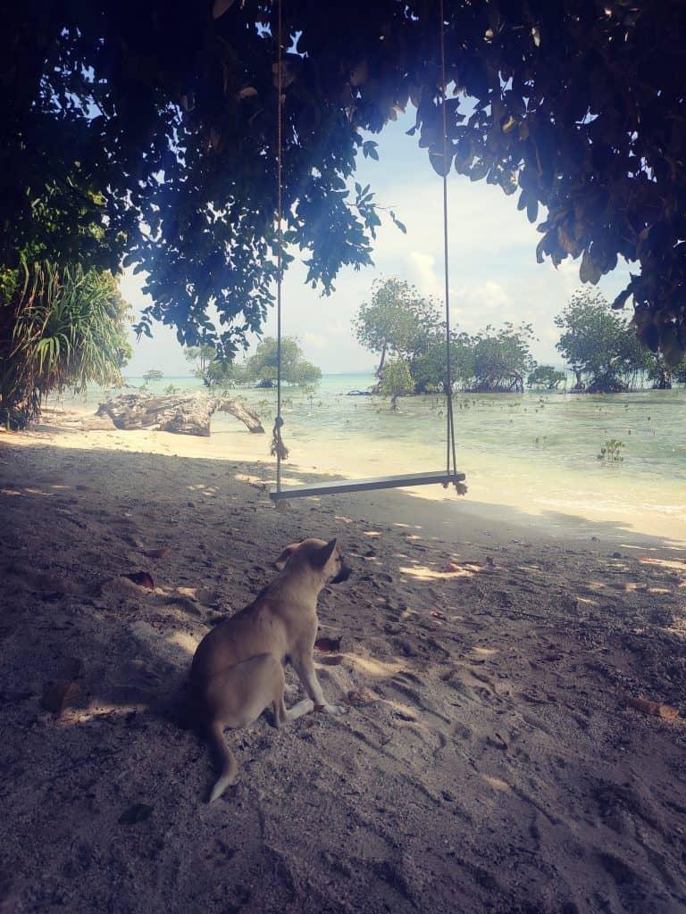 4 day Andaman itinerary Beach dogs Havelock